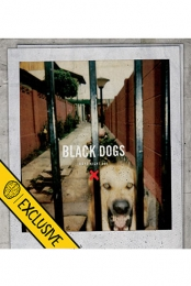 Boys Night Out - Black Dogs (2ND EDITION Smartpunk Exclusive Yellow Vinyl /200)